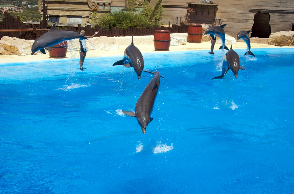 delfinario mundomar