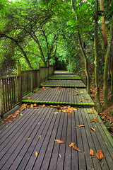 Boardwalk into the Forest :: HDR