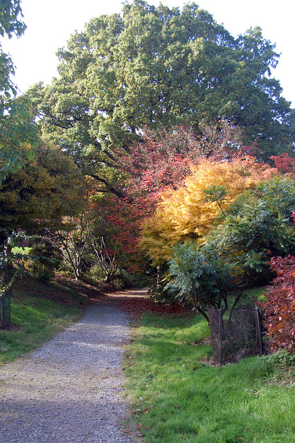 Acer Valley @ Hillier Gardens | Flickr - Photo Sharing!