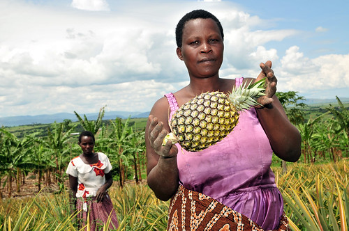 Pineapple farmer, Ntungamo District, Uganda