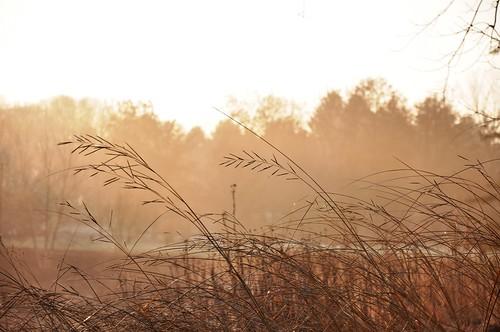 morning november autumn trees light sky lake fall sunshine silhouette gold dawn woods glow shore rushes tassel meadowlake mortonarboretum