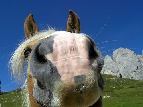 3911251377 4c956947b7 Stupid Horse