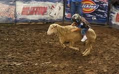 western riding(0.0), racing(0.0), equestrian sport(0.0), charreada(0.0), barrel racing(0.0), bull riding(0.0), animal sports(1.0), rodeo(1.0), soil(1.0), event(1.0), sports(1.0),