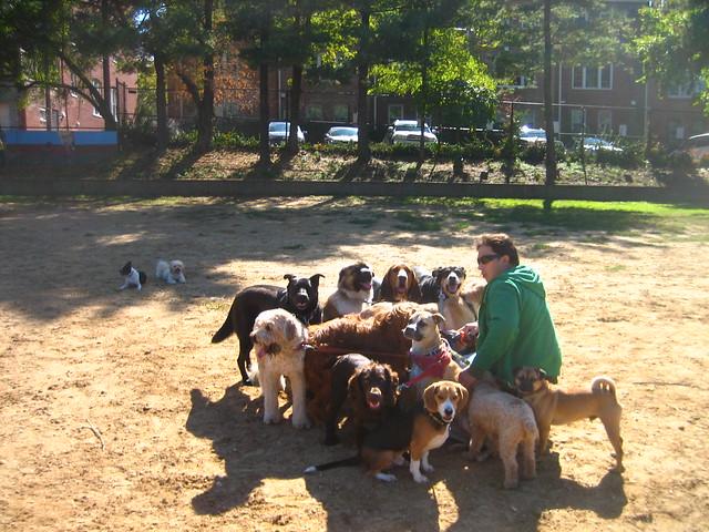 Individual Dog Walker Newquay Uk