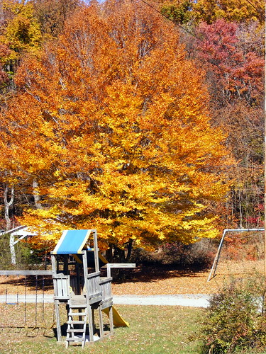 county autumn trees fall leaves playground yellow gold golden md swings maryland slide foliage midland junglegym allegany slidingboard thepatch sportmansclub javcon117 frostphotos