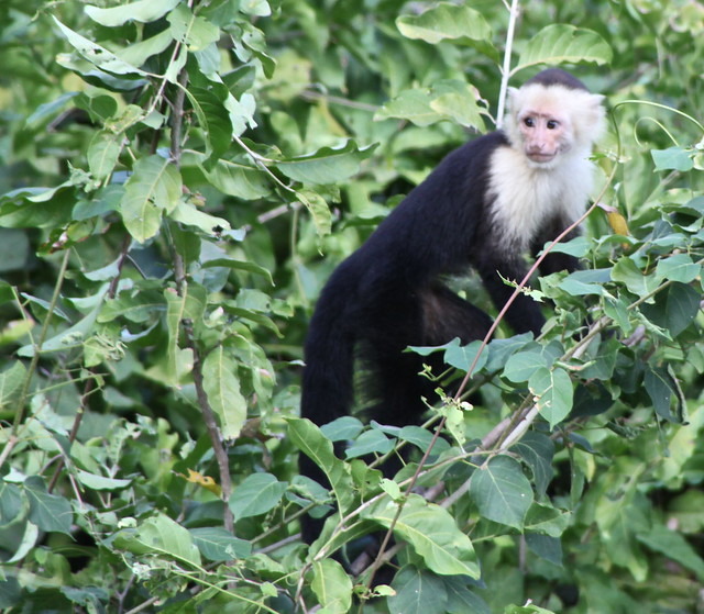 Monkey Business - Resistance Is Futile