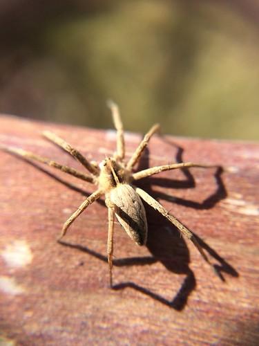 Bild 3 unbekannte Spinne , NGIDn2081588555