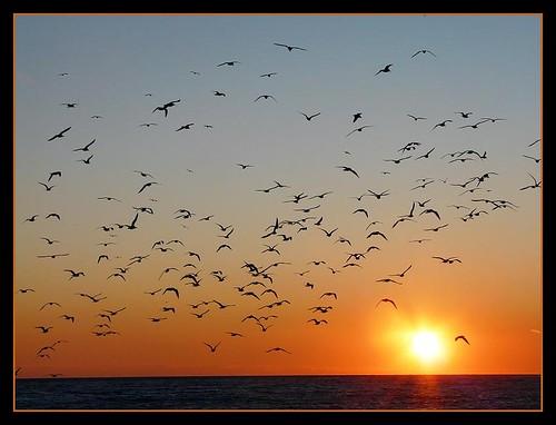 sunset sea españa atardecer mar spain aves andalucia explore pájaros migración puestadesol malaga andrés anochecer nerja axarquia migrar breijo andresbreijo