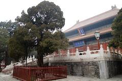 Beijing / Peking 2014
