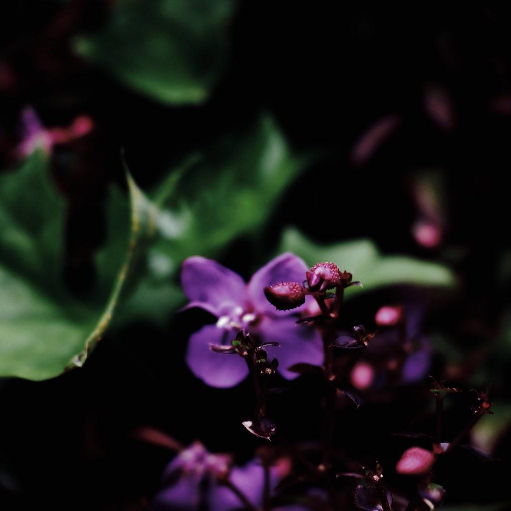 Flower In Between Buds