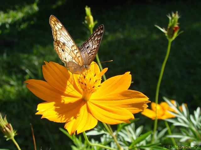 Natureza em cor... borboleta conhece o sabor!