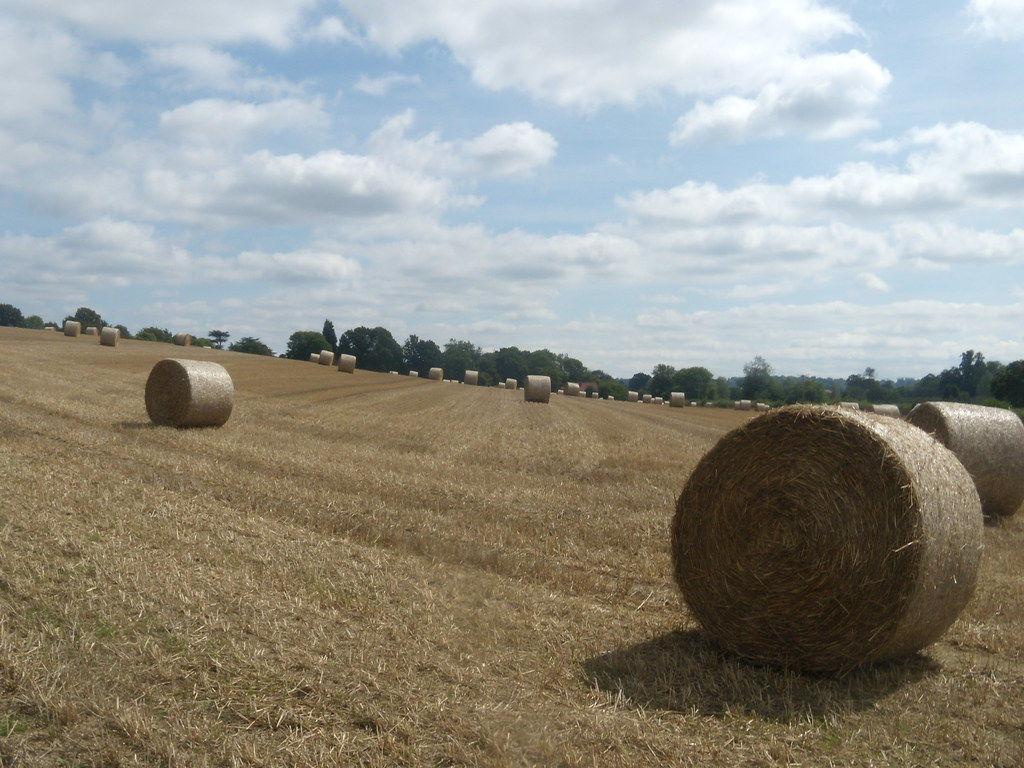 Bales Cowden to Hever