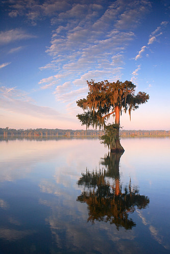 morning lake reflection tree water sunrise la louisiana lafayette south swamp cypress acadiana lakemartin benpierce