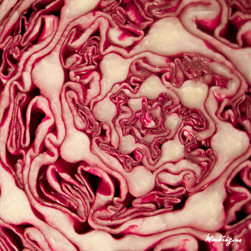 Chou rouge - Red cabbage