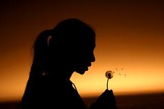 horizon, backlighting, sunlight, evening, light, silhouette, morning, darkness, dusk, sunset,