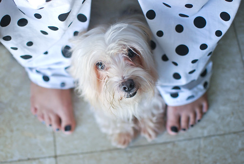 350/365 - Dog and Polka dots