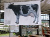 Photo:cow banner #8111 By Nemo's great uncle