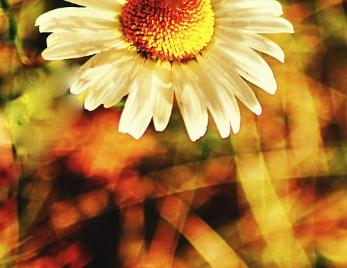 Sun and Bokeh by digitalambitions/ Valerie Hogg