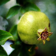 seedy apple:  218/365