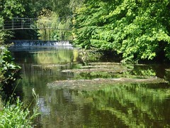 nature reserve, wetland, stream, woodland, leaf, water, tree, bank, fish pond, riparian forest, body of water, watercourse, reflection, pond, waterway,