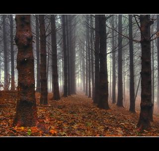 A Secret Path In A Misty Wood