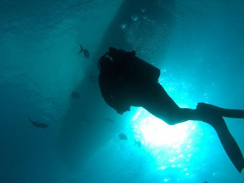 underwater scuba diving photofriday tranquil bonaire noteworthy photofridaywinner