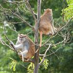 Woodland Park Zoo Seattle 043