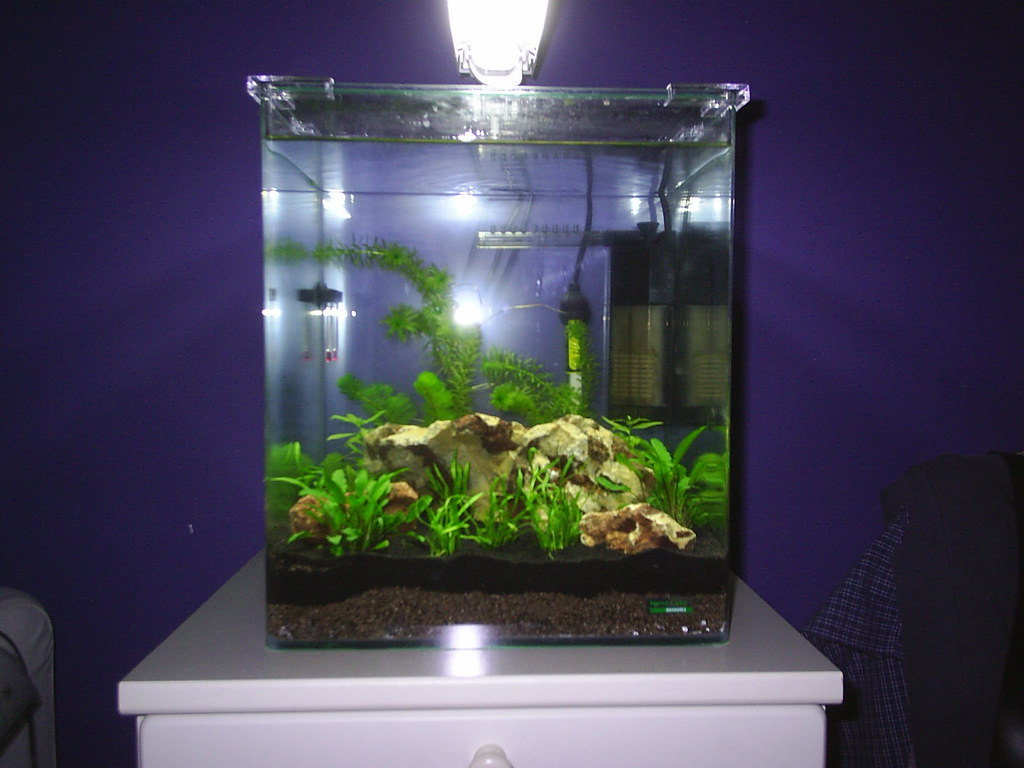 first tank dennerle nano cube 30l new to planted aquariums aquatic plant central. Black Bedroom Furniture Sets. Home Design Ideas