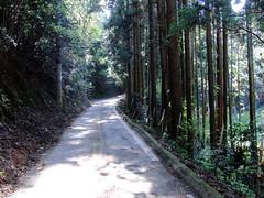 Road 01