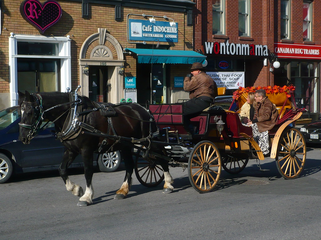 A Horse-Drawn Carriage in Ottawa.