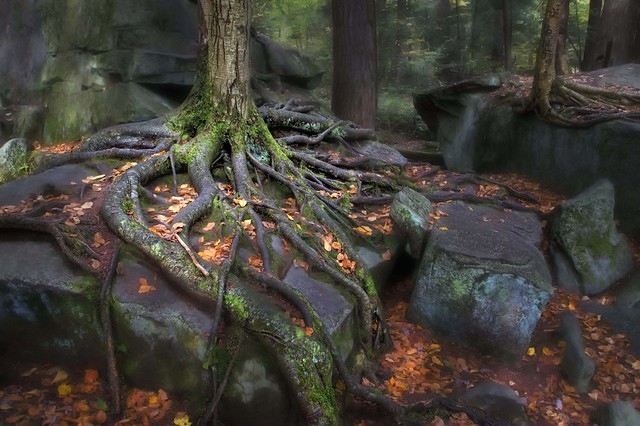 Roots and Rocks - Swallow Falls State Park | Flickr - Photo Sharing!