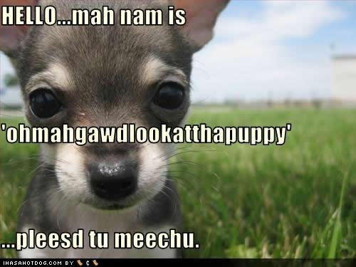 cute-puppy-pictures-pleesd-meechu