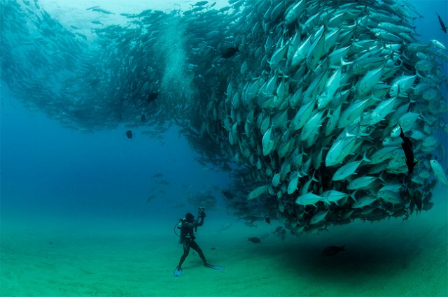 fish-tornado-001