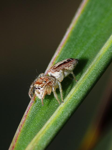 Spider Macro Shot |