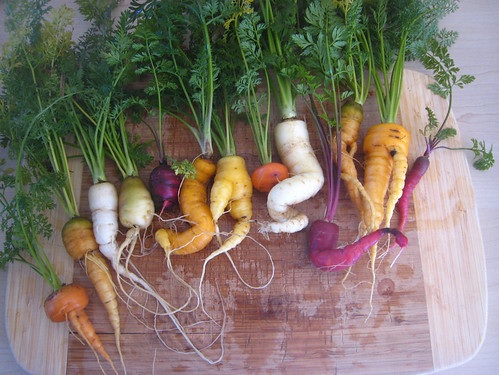 Heirloom carrots: the little ones