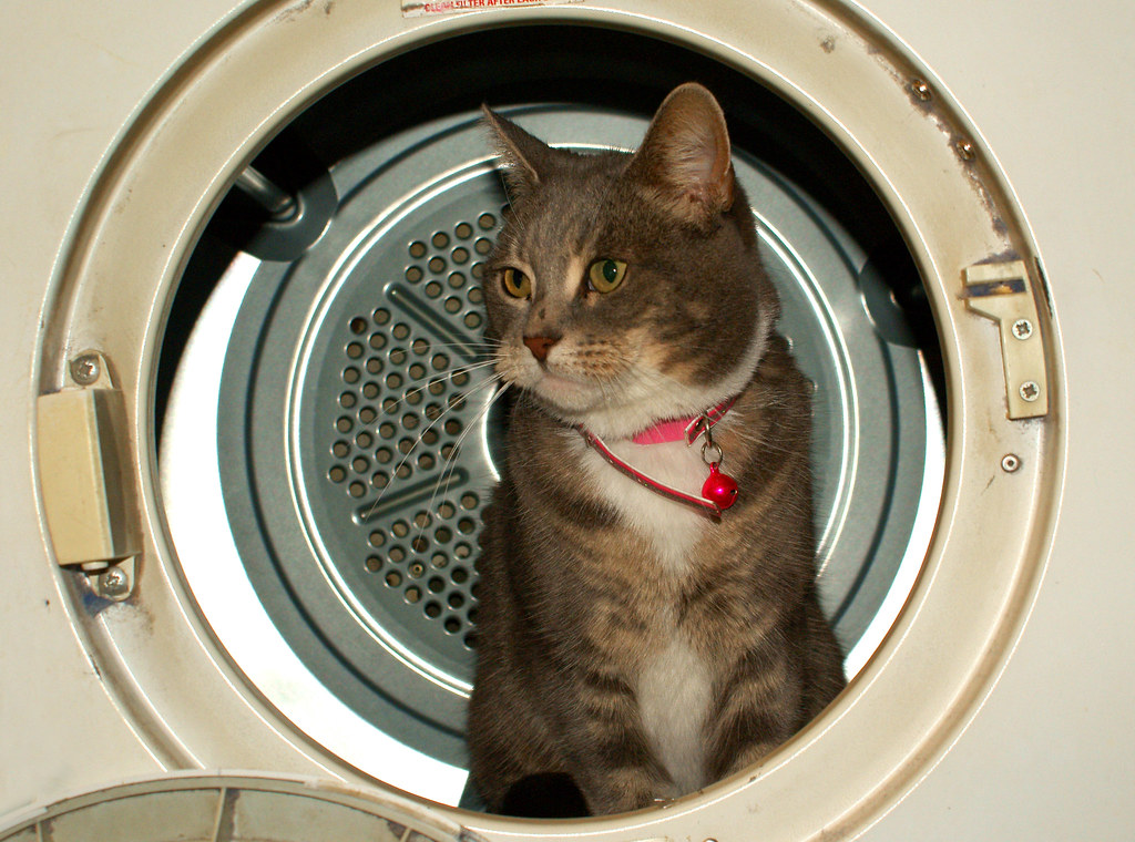 Image result for cat washing machine