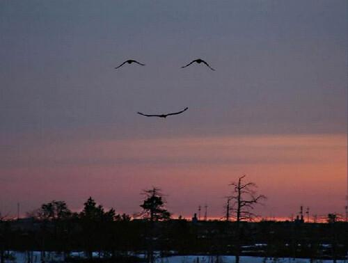 High Smile