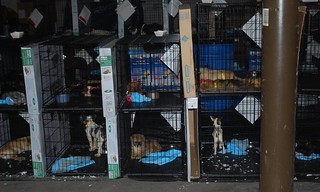 puppy mills should be illegal  at they need help too