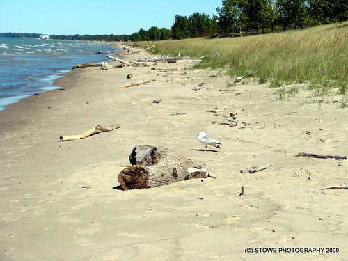Pinery Beach