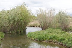 nature reserve, wetland, swamp, stream, floodplain, river, bank, riparian forest, watercourse, bayou, canal, pond, waterway, marsh,