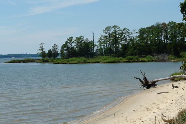 The habitat at Belle Isle State Park is perfect for bald eagles.