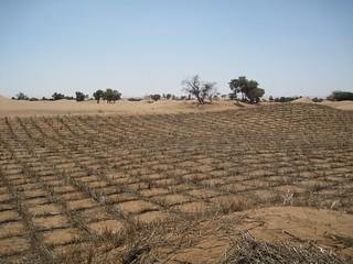 Preventing desertification