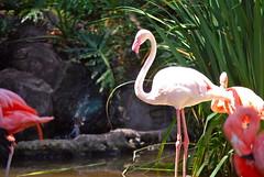 flower(0.0), ibis(0.0), animal(1.0), zoo(1.0), fauna(1.0), beak(1.0), flamingo(1.0), bird(1.0), wildlife(1.0),