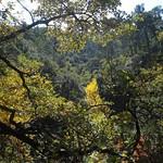 Forest in the Dentelles above Sablet