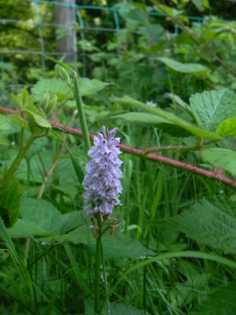 Orchid Plenty of these today Wadhurst Circular