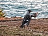 Birds Stradbroke island