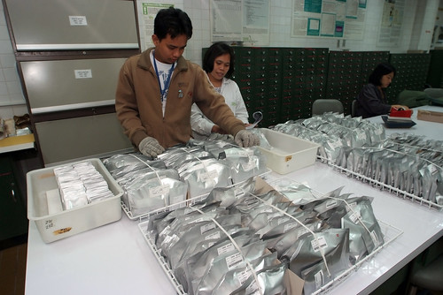 International Rice Research Institute Employees Preparing Packets to Ship to Svalbard