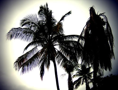 light green lomo good palmeras retro balance ecologia
