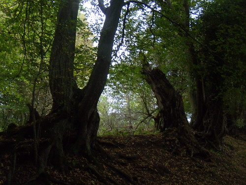 Old hedgerow