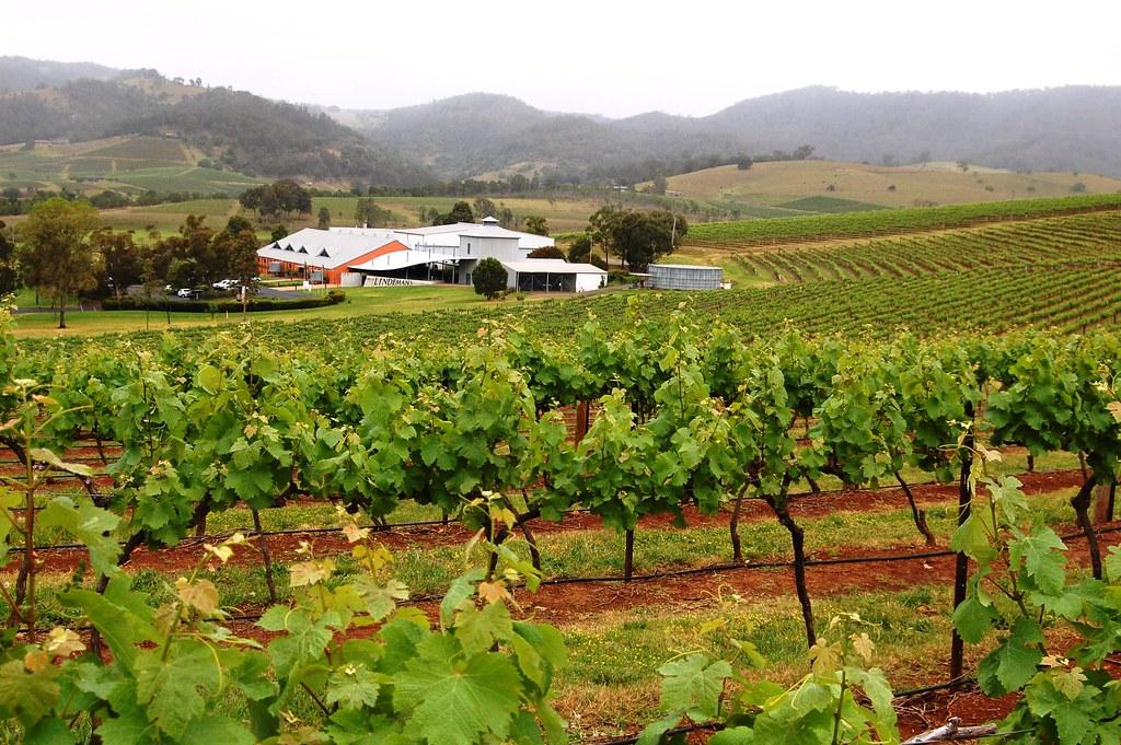 Hunter Valley vineyard, NSW